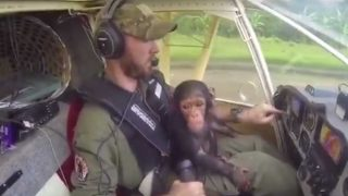 pilot flies chimp to safety